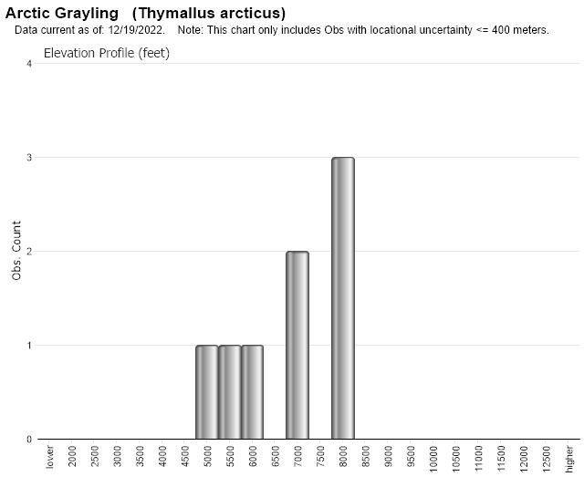 Arctic Grayling - Montana Field Guide