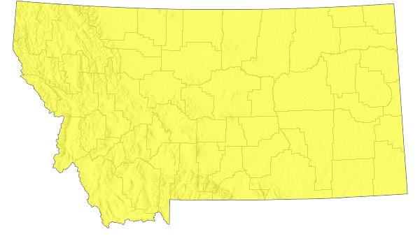 Snow Goose - Montana Field Guide