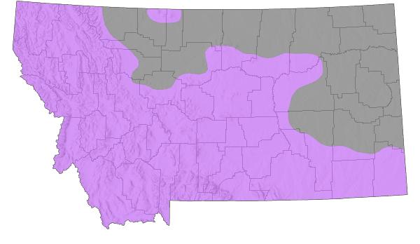 Elk - Montana Field Guide