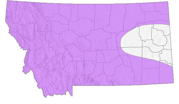 Moose - Montana Field Guide