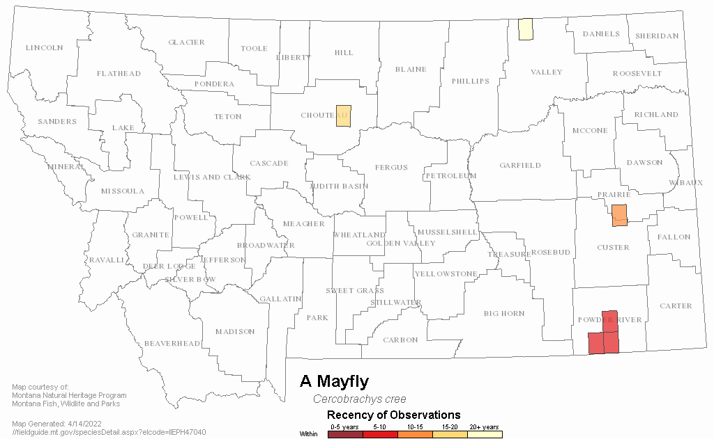 A Mayfly Montana Field Guide